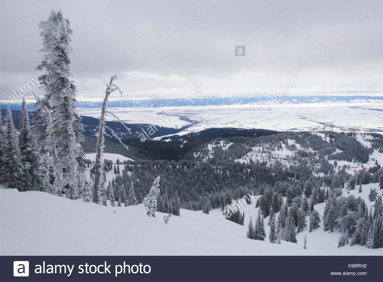 Escena de invierno con nieve y escarcha cubiertas de árboles en las montañas. Imagen De Stock