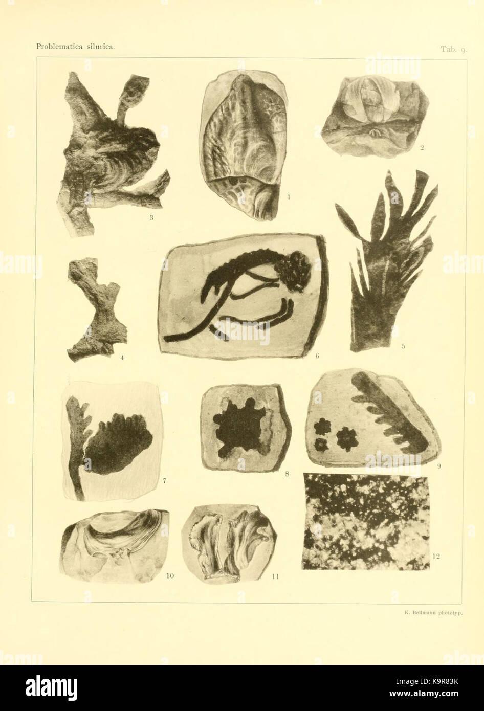 Problematica Silurica (Lámina 9) (7629250598) Foto de stock