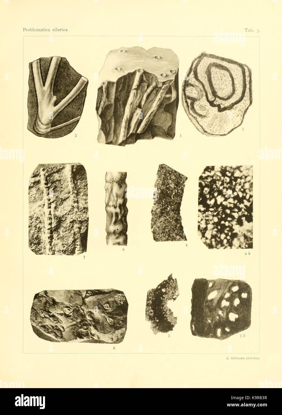 Problematica Silurica (Lámina 5) (7629248204) Foto de stock