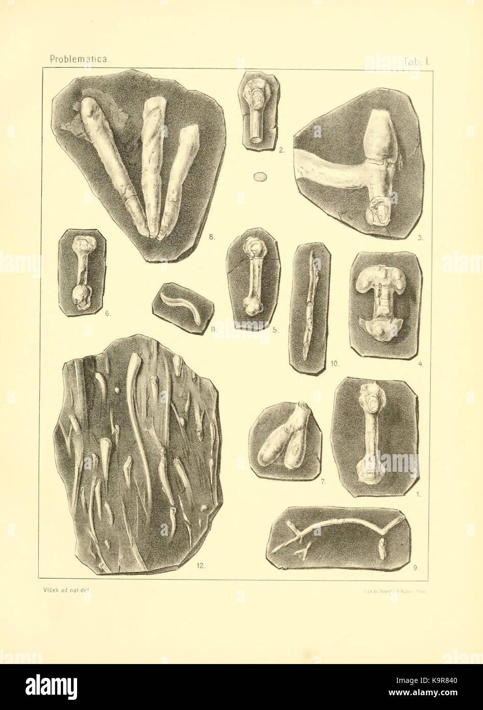 Problematica Silurica (Lámina 1) (7629245628) Foto de stock