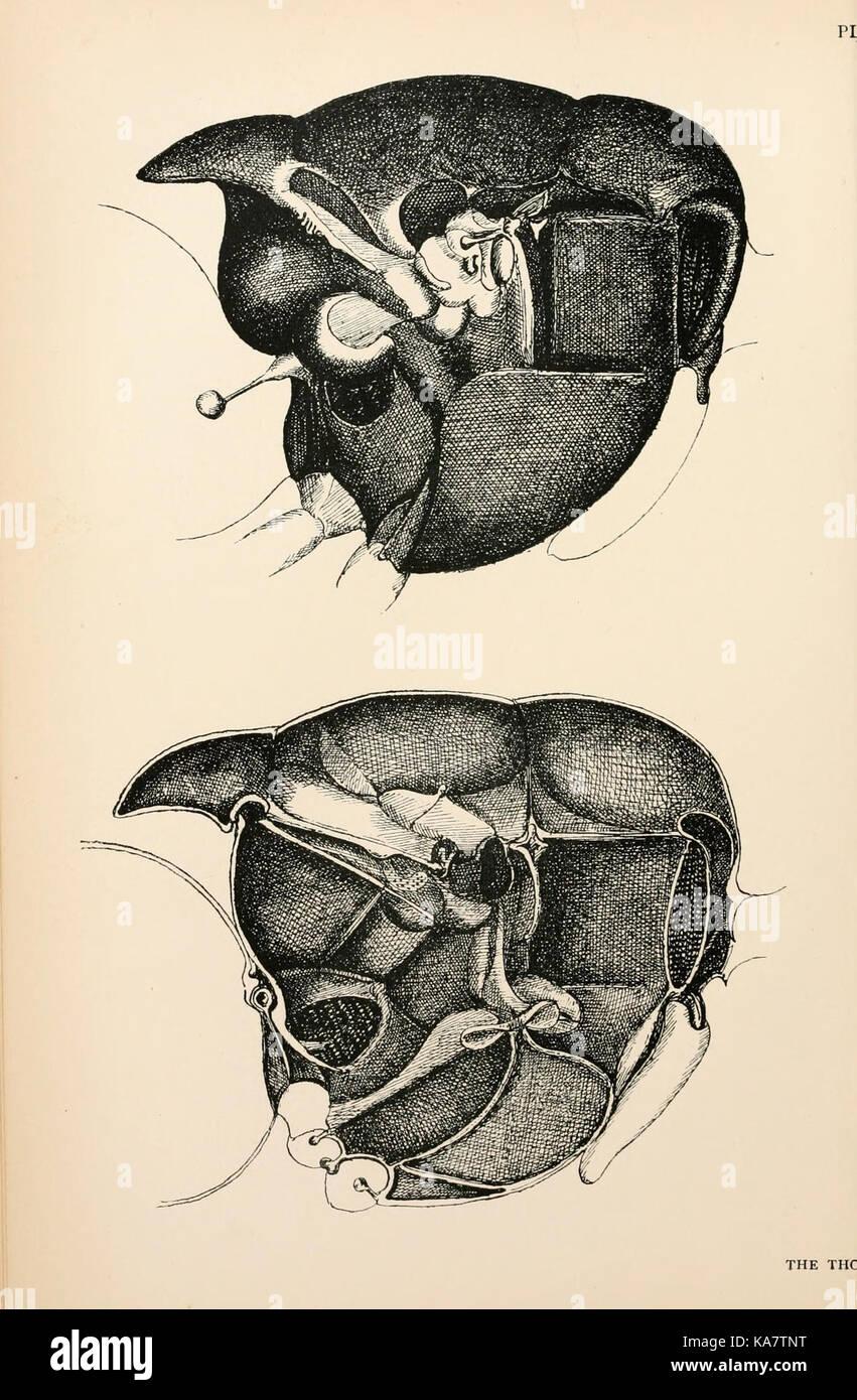 Hermosa Anatomía De Una Mosca Friso - Imágenes de Anatomía Humana ...