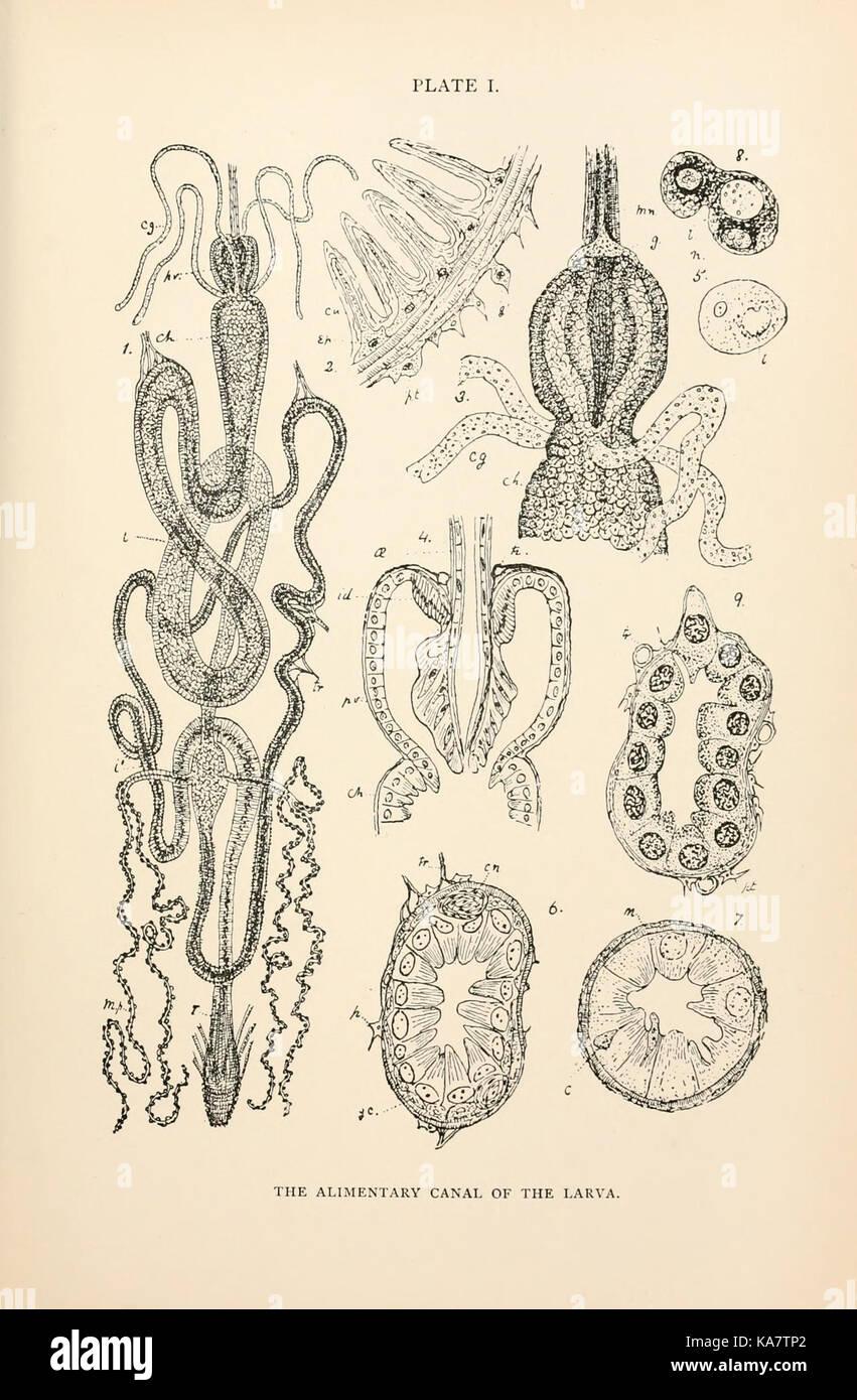 La anatomía, la fisiología, la morfología y el desarrollo de la ...