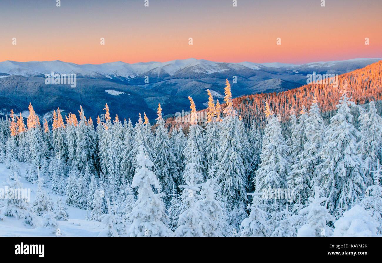 Misterioso paisaje invernal majestuosas montañas en invierno. Invierno mágico árbol cubierto de nieve. Carretera de invierno en las montañas. En previsión de las vacaciones. Dramática escena invernal. Los Cárpatos. Ucrania Foto de stock