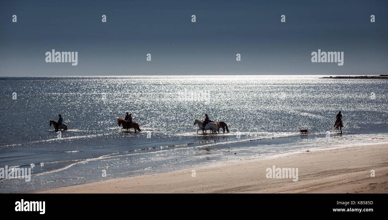 Cabalgatas en la playa longufjordur, península de Snaefellsnes, Islandia Foto de stock