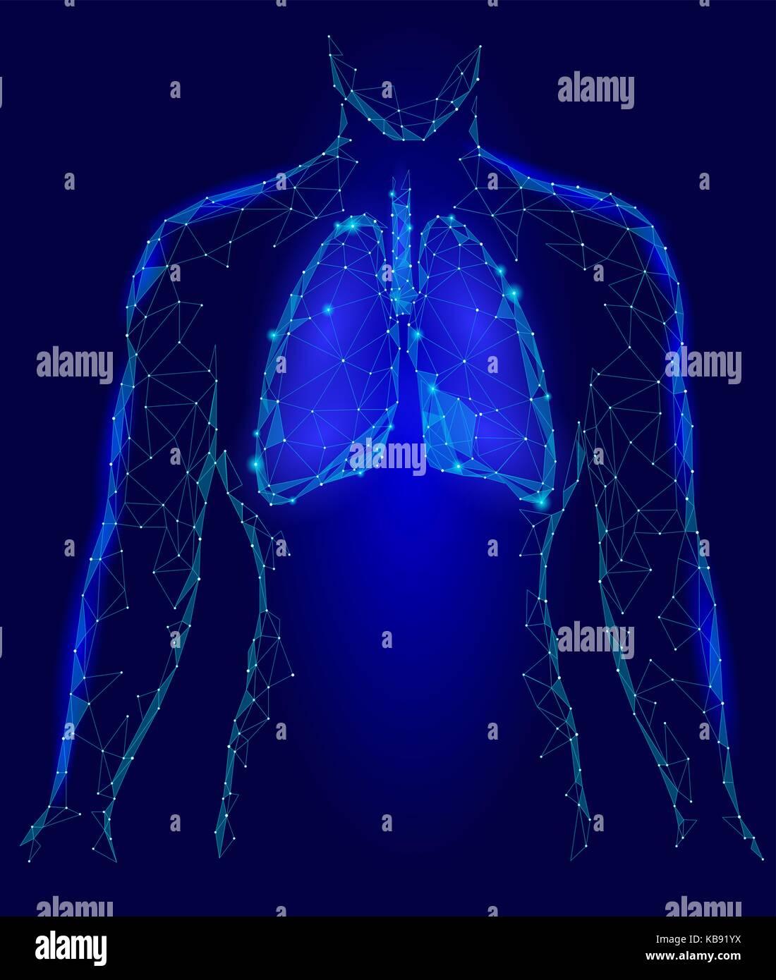 Los pulmones Sistema respiratorio órgano interno. dentro del cuerpo ...