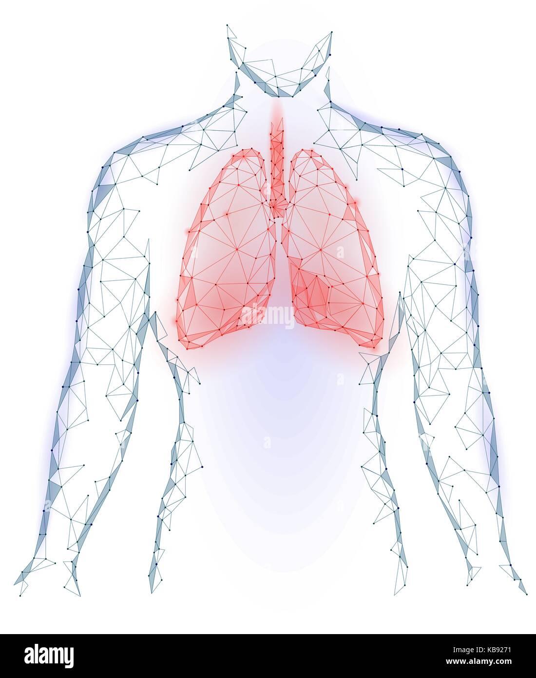 Human Respiratory System Imágenes De Stock & Human Respiratory ...