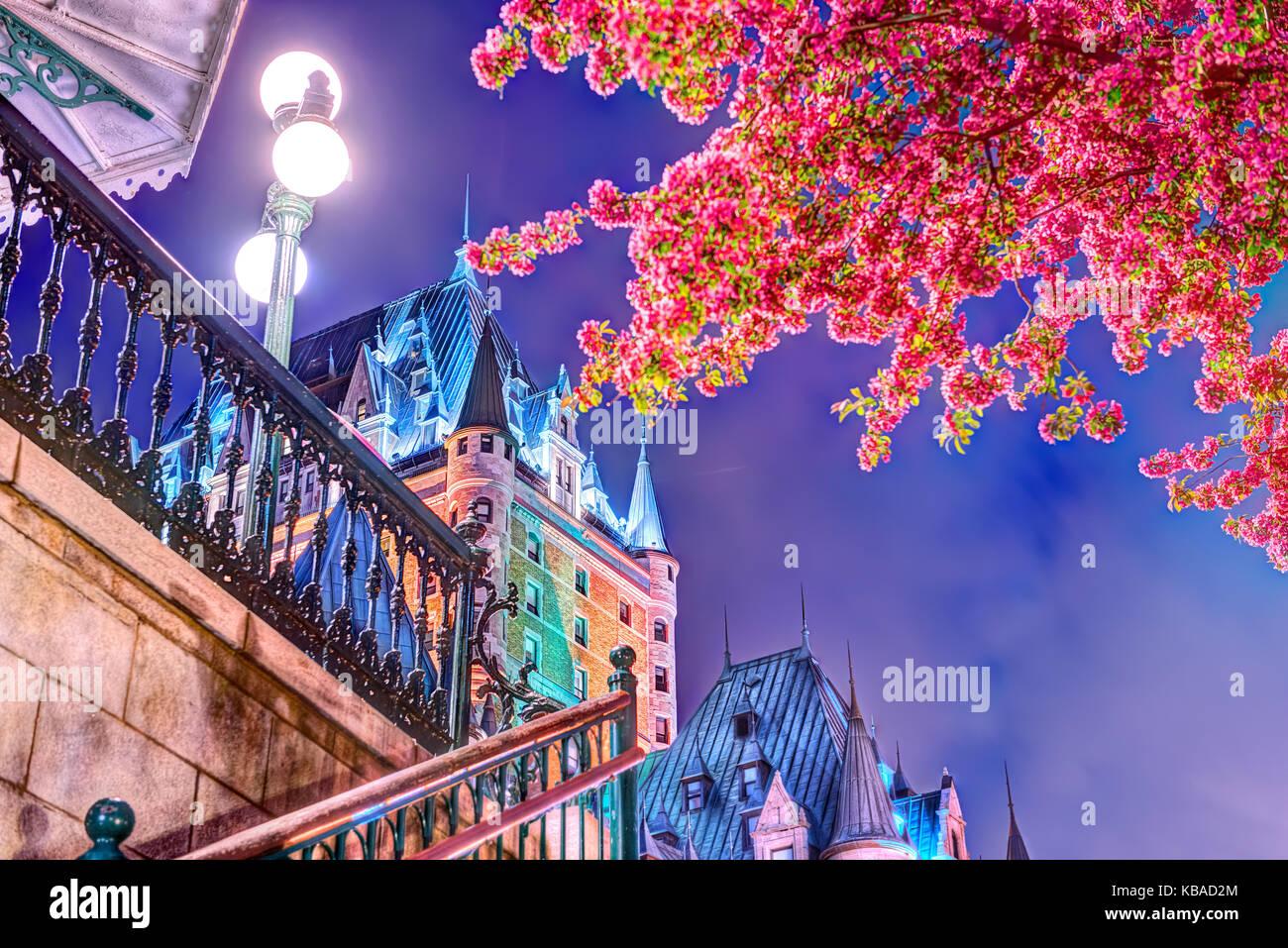 La Ciudad de Quebec, Canadá - 31 de mayo de 2017: iluminado árbol en flor crabapple escalier funiculaire Chateau Frontenac Hotel por la noche, lámparas, lanter Foto de stock