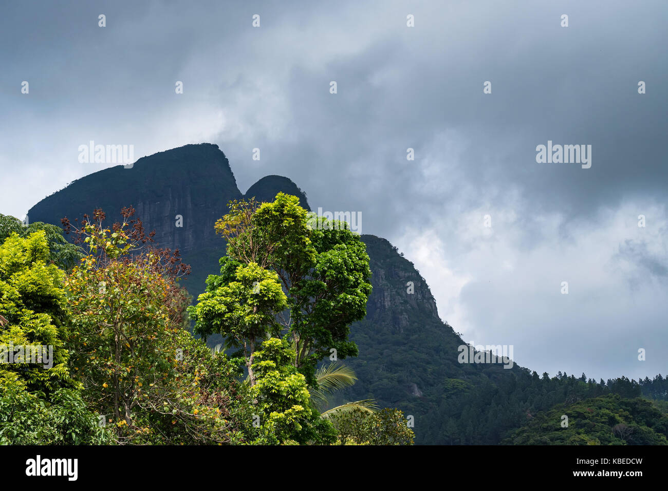 Vista panorámica del bosque de montaña srilankan Imagen De Stock