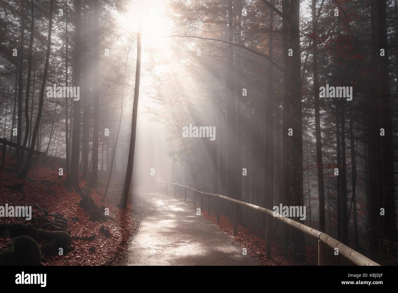 Camino interminable cruzando un bosque oscuro, en colores de otoño, envuelto por la niebla y iluminados por los Foto de stock