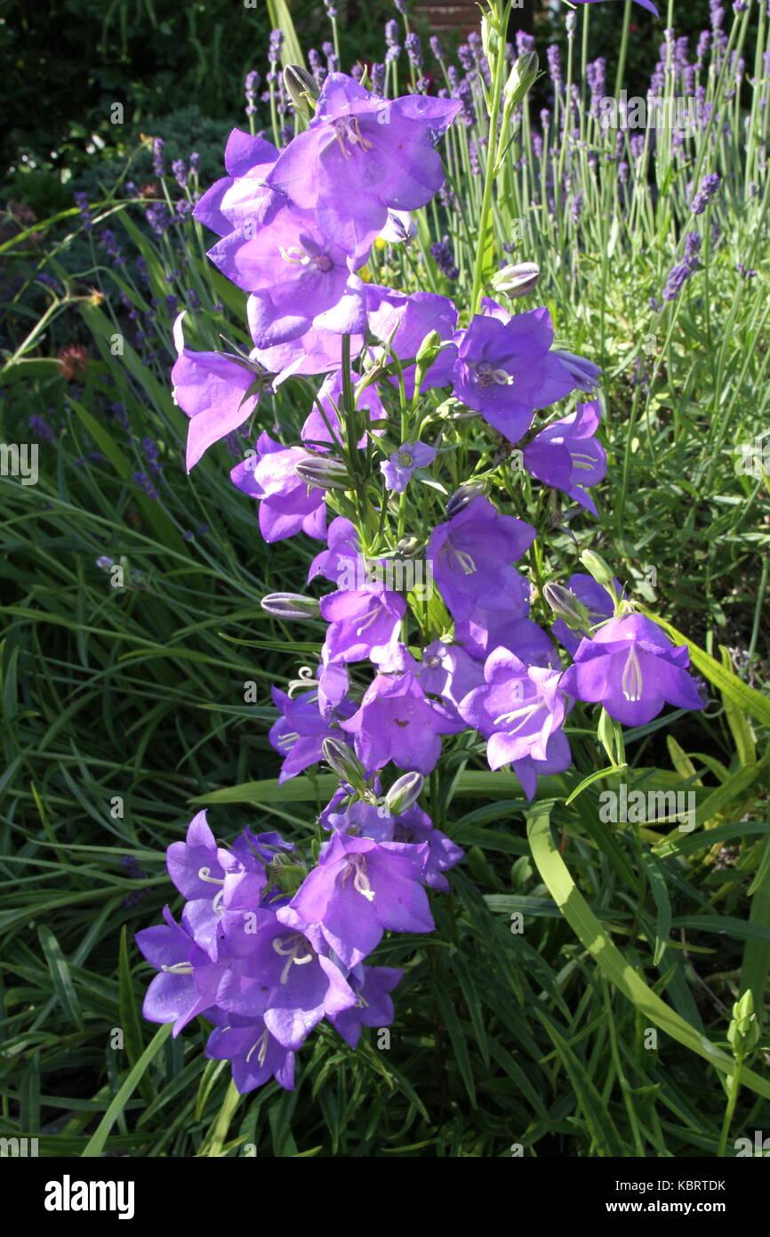 Las flores del jardín británico Foto de stock