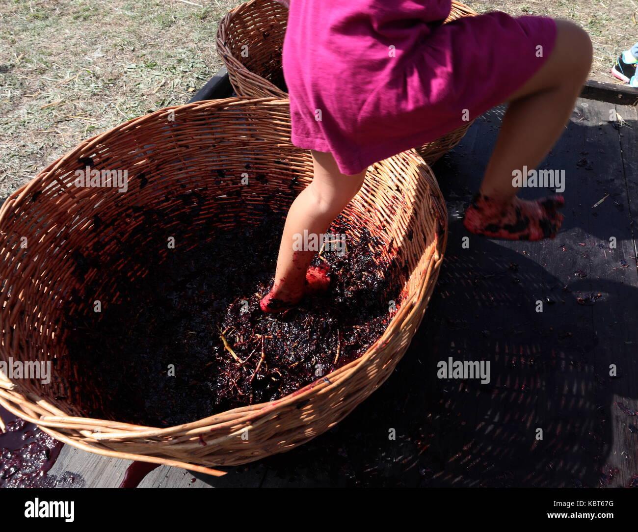 Crimea, Rusia. 30 sep, 2017. Un niño winefest stomps uvas en la vendimia y elaboración del vino en el festival de zolotaya balka bodega en la ciudad de balaklava. Crédito: Sergei malgavko/tass/alamy live news Foto de stock