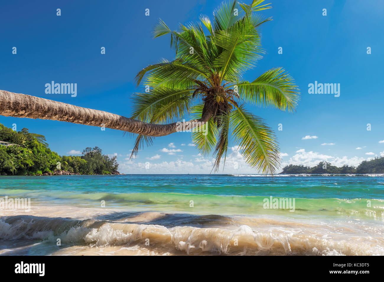 La palmera en playa hermosa. Foto de stock