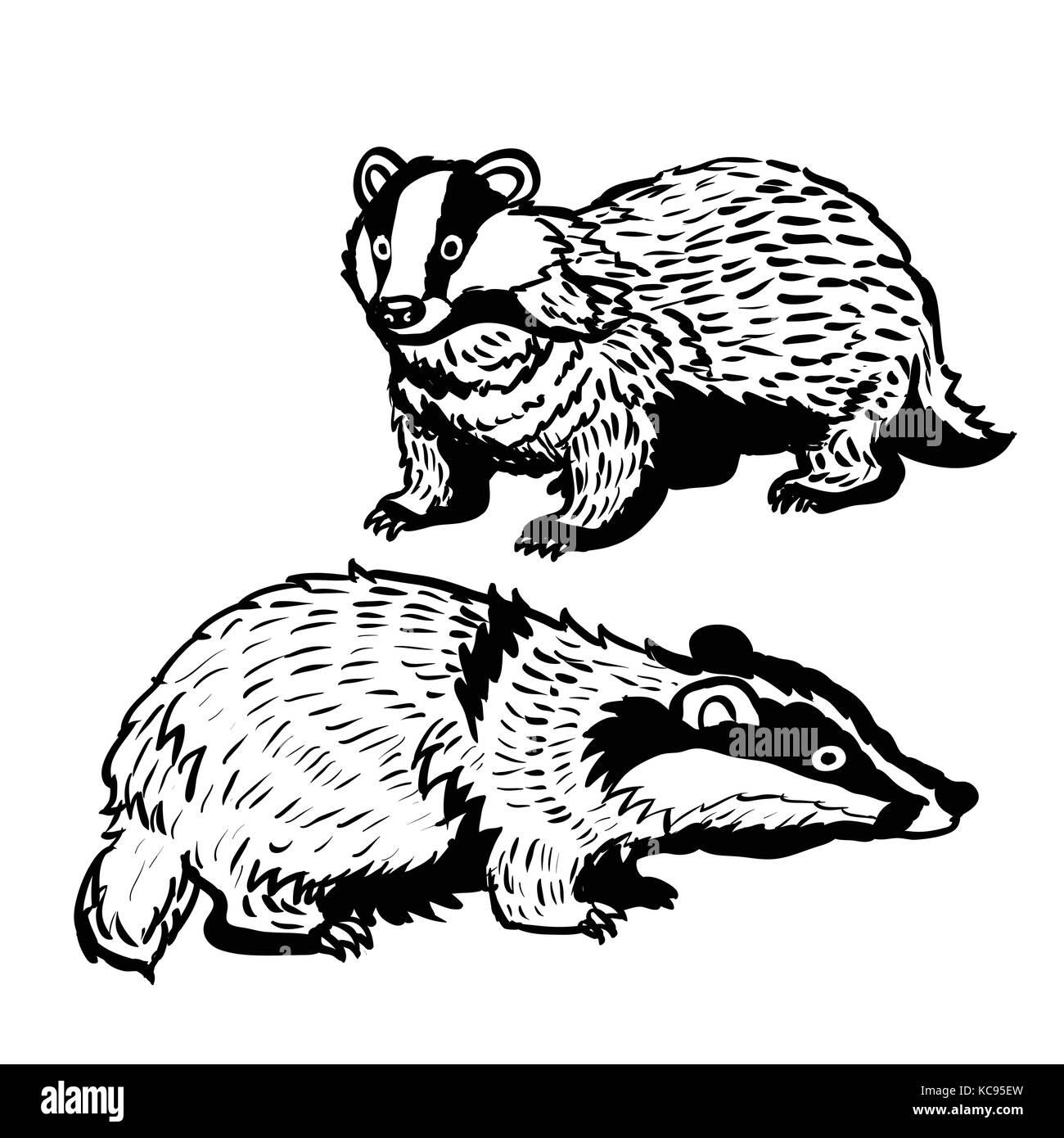 Zoo Animal Badger Imágenes De Stock & Zoo Animal Badger Fotos De ...