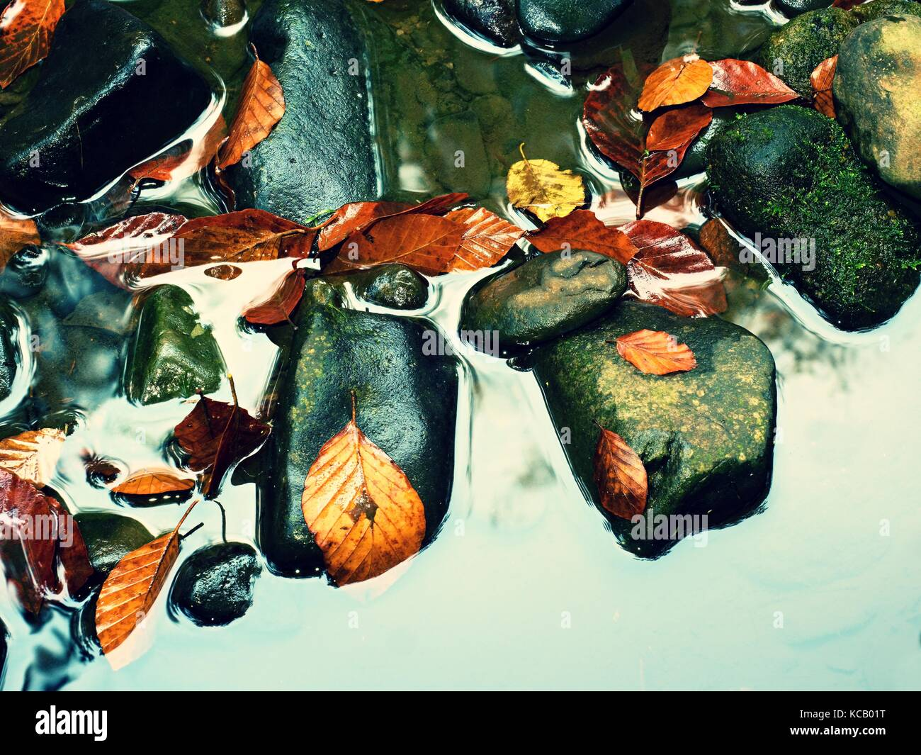 Colores de otoño podrido. Detalle de hojas viejas de grava de basalto con espejos de agua de arroyos de montaña. Imagen De Stock