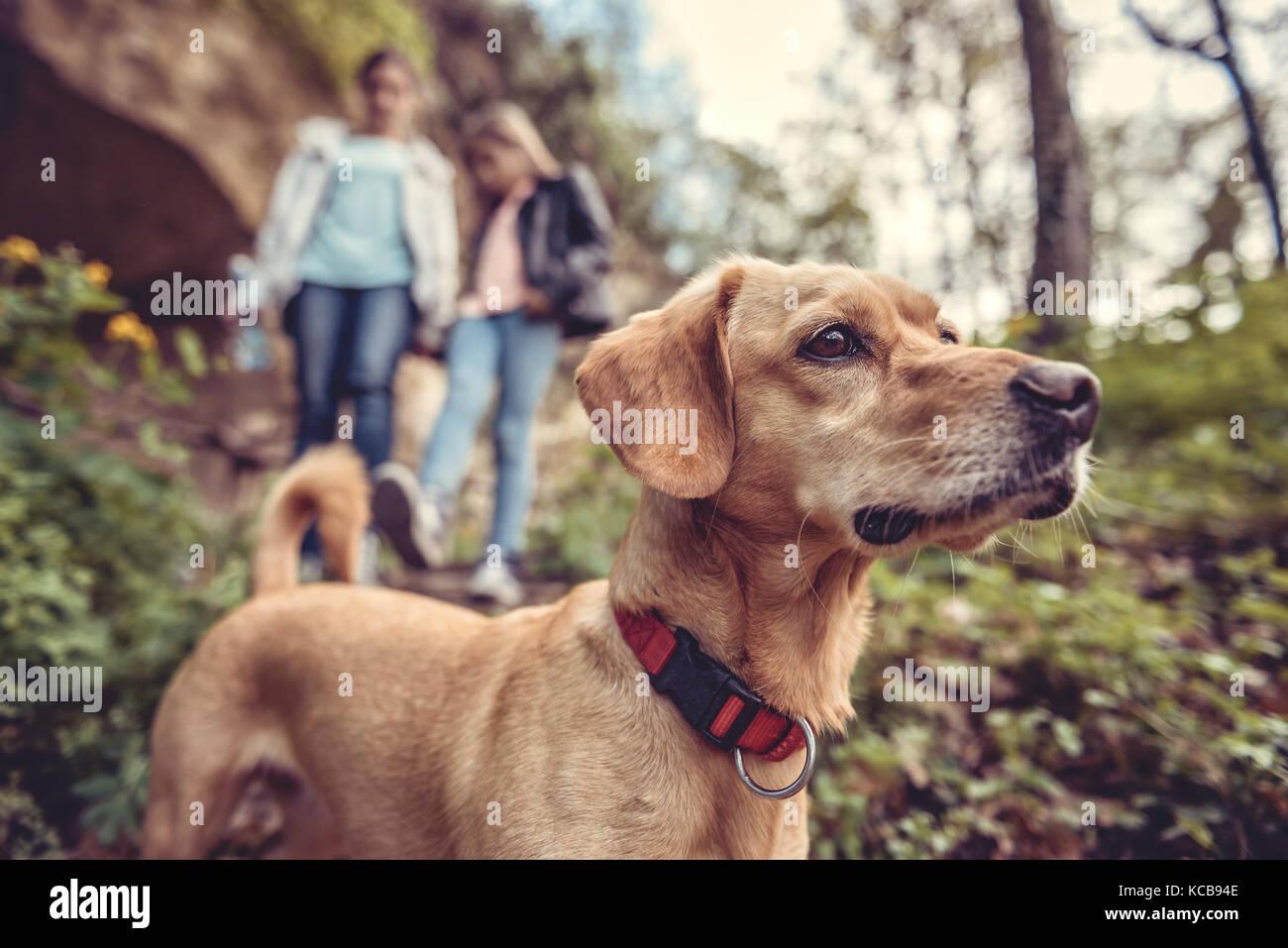 Pequeño perro amarillo en una pista forestal con una gente caminando en el fondo Imagen De Stock