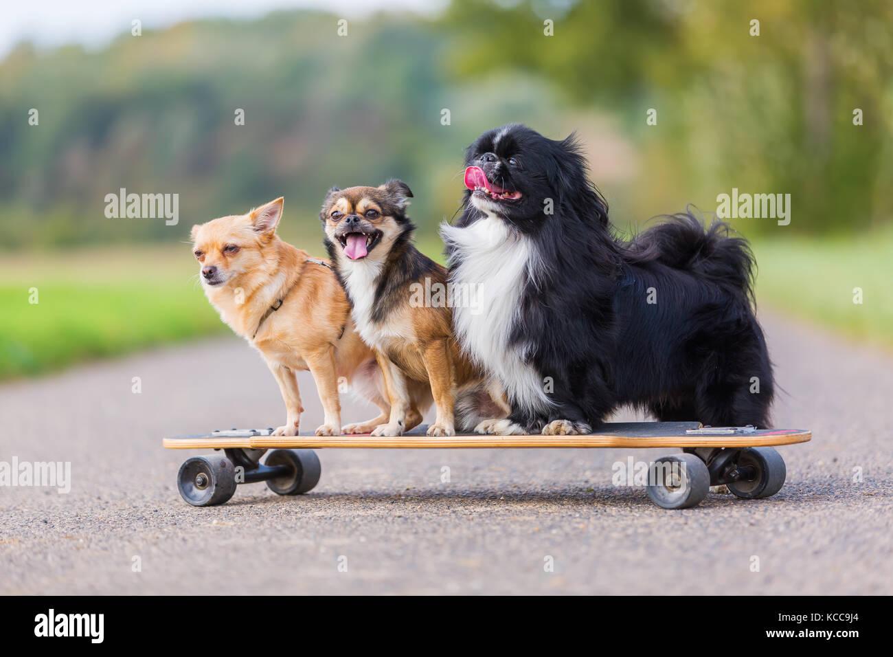 Imagen De Tres Perros Pequeños Y Bonitos Que Están Sentados En Un