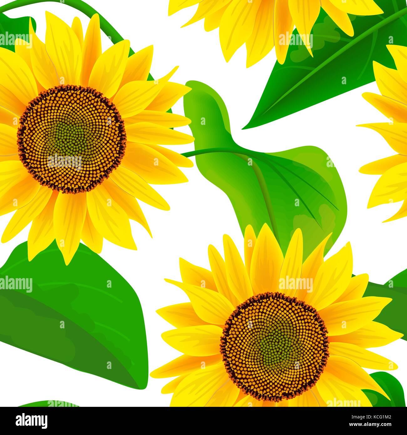 Girasoles Seamless Vector Patrón Otoño Imprimir Las Flores Y Las Hojas Para El Textil Decoración Empaque Envoltura Imagen Vector De Stock Alamy