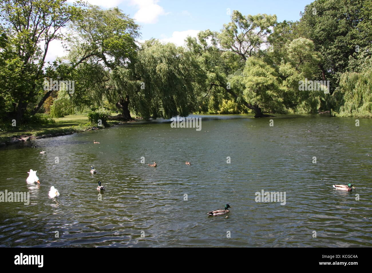 Vistas a los jardines Thwaite Hall en Cottingham, East Yorkshire Foto de stock