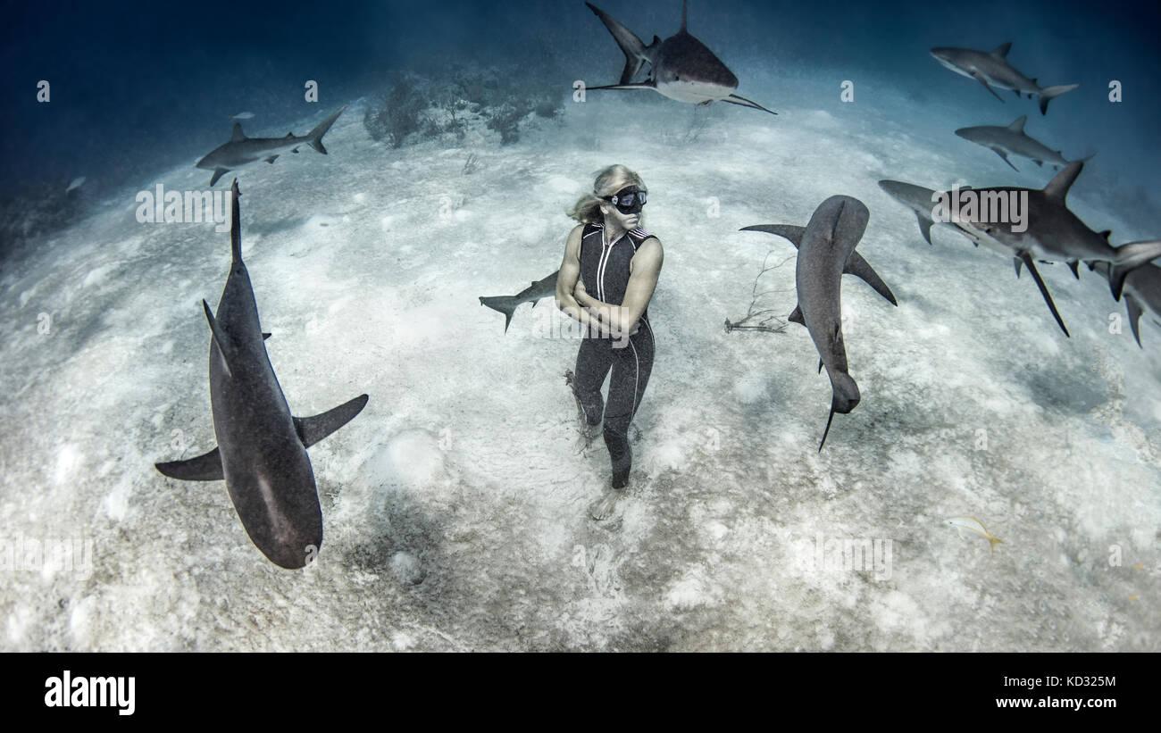 Vista submarina de mujeres libres de pie en los fondos marinos buzo rodeado de tiburones de arrecife, Bahamas Foto de stock