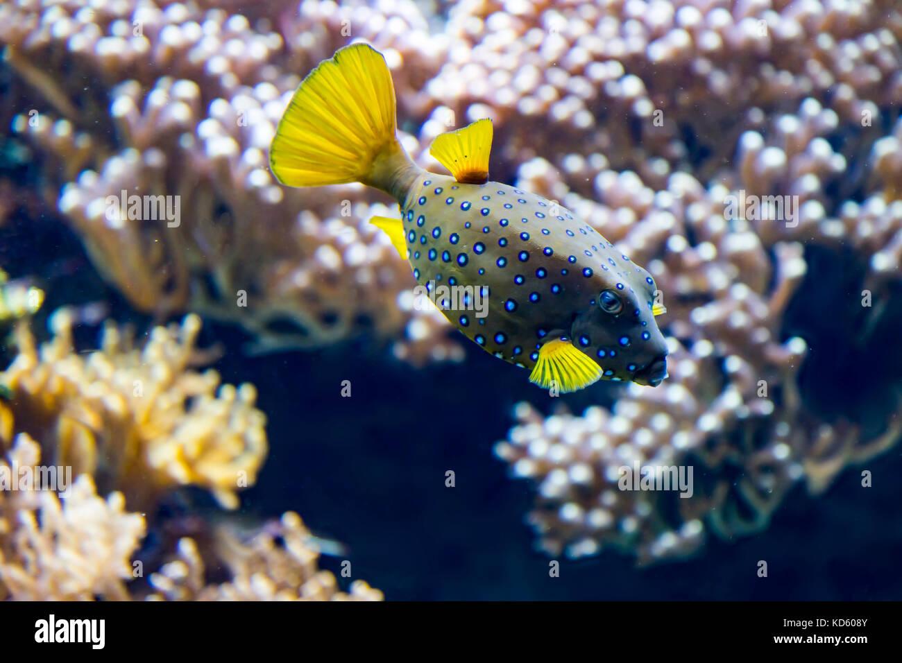 Peces tropicales y más Foto de stock