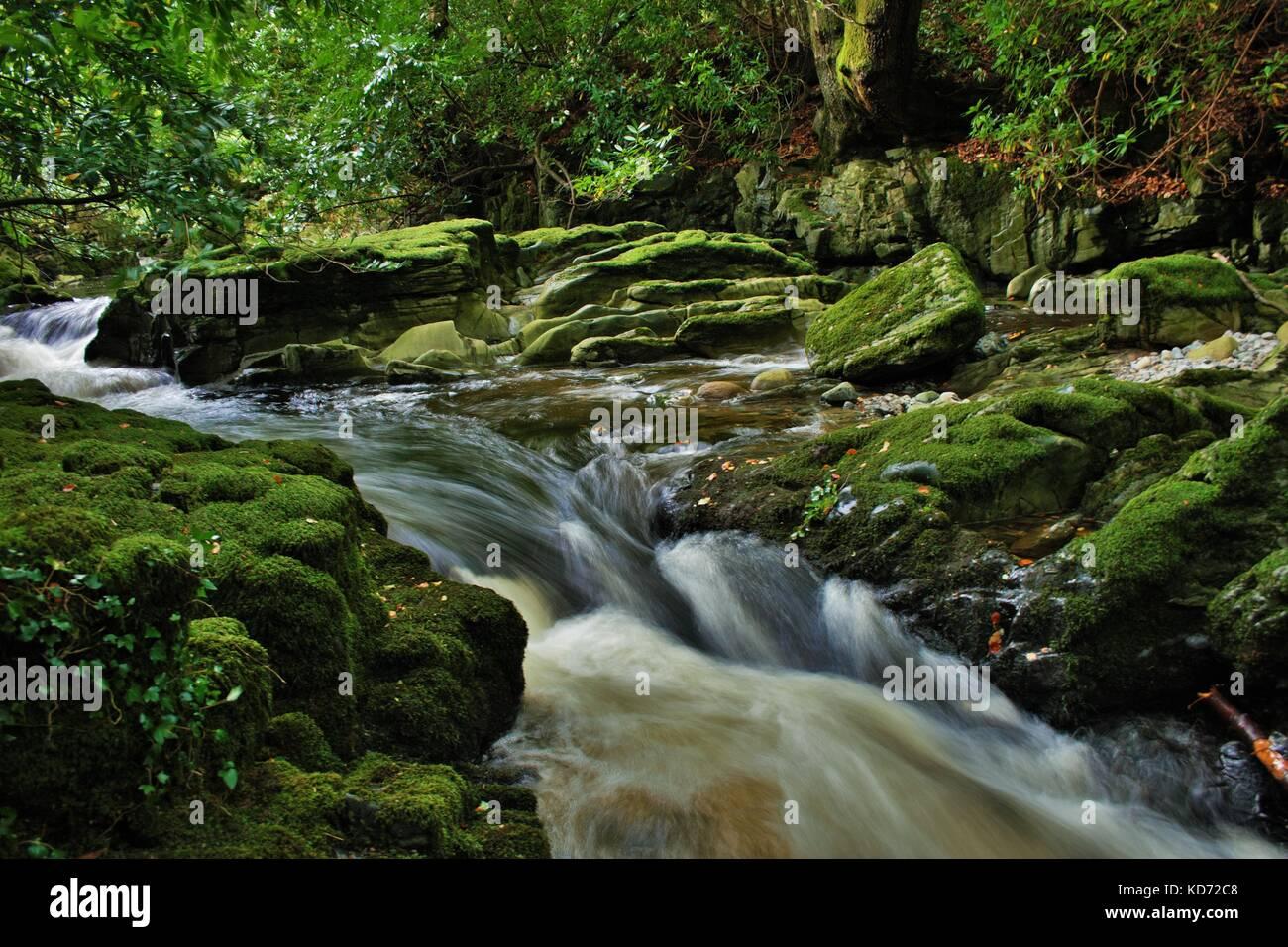 La larga exposición foto de río que fluye a través de las rocas y de los árboles en el bosque, tullymore IRLANDA DEL NORTE Foto de stock
