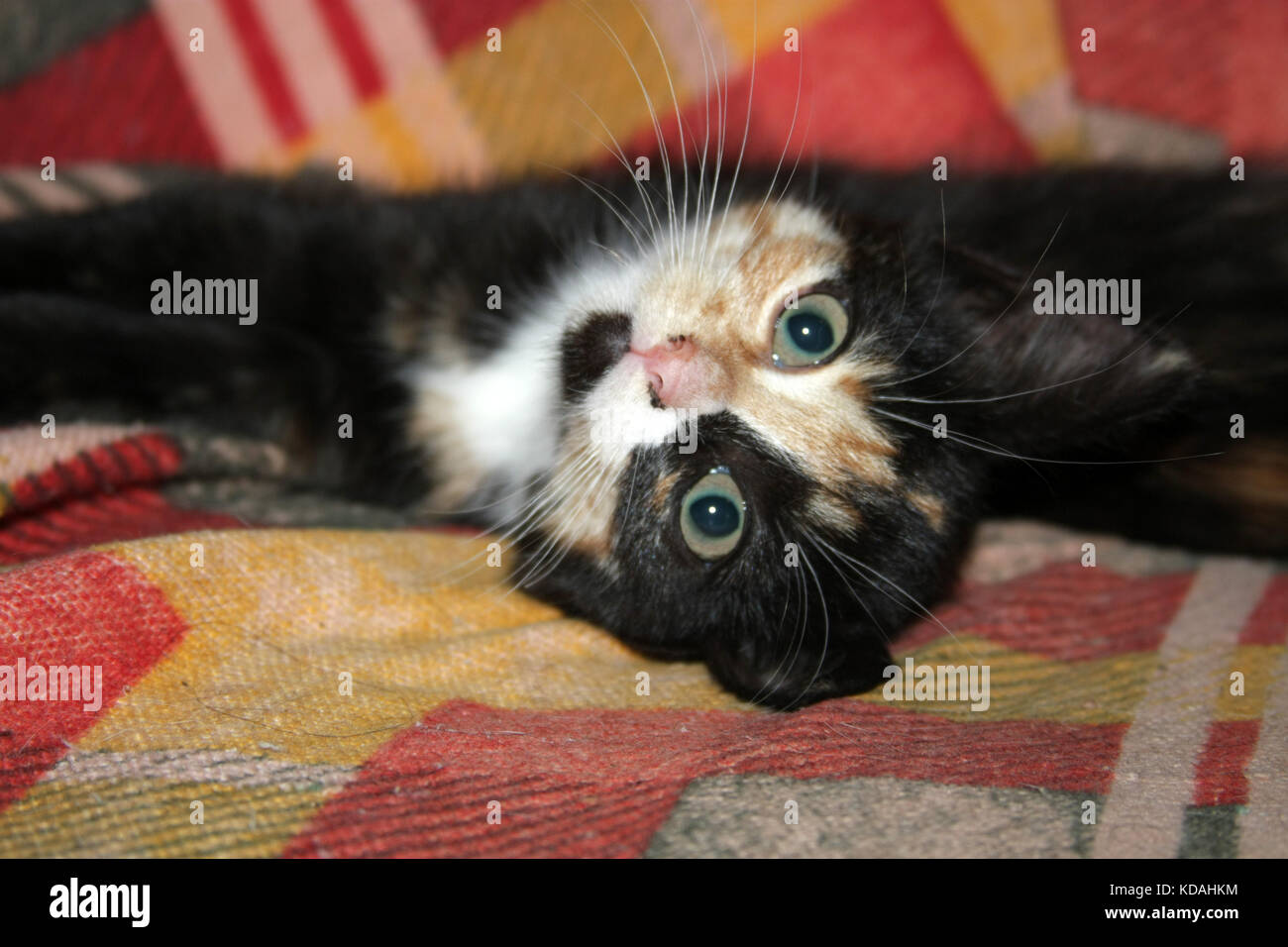 Color divertido gatito establece y reproduce en su silla .mirar Foto ...