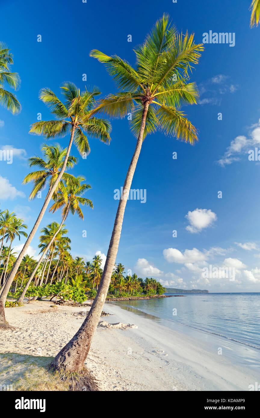 Los cocos en la playa en la península de Samaná, República Dominicana Imagen De Stock