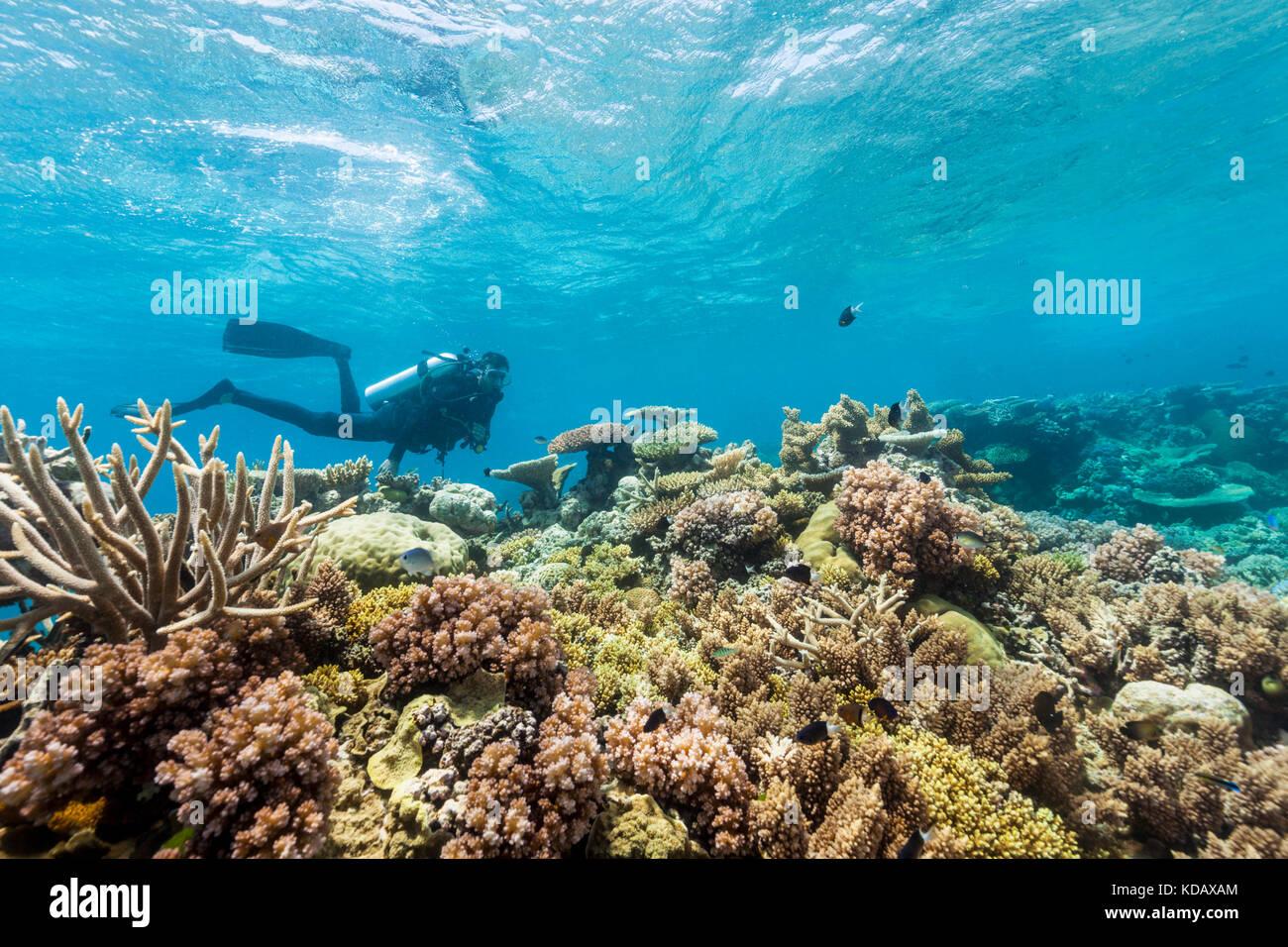 Los buzos explorando los arrecifes de coral, formaciones de arrecife Agincourt, Great Barrier Reef Marine Park, Imagen De Stock