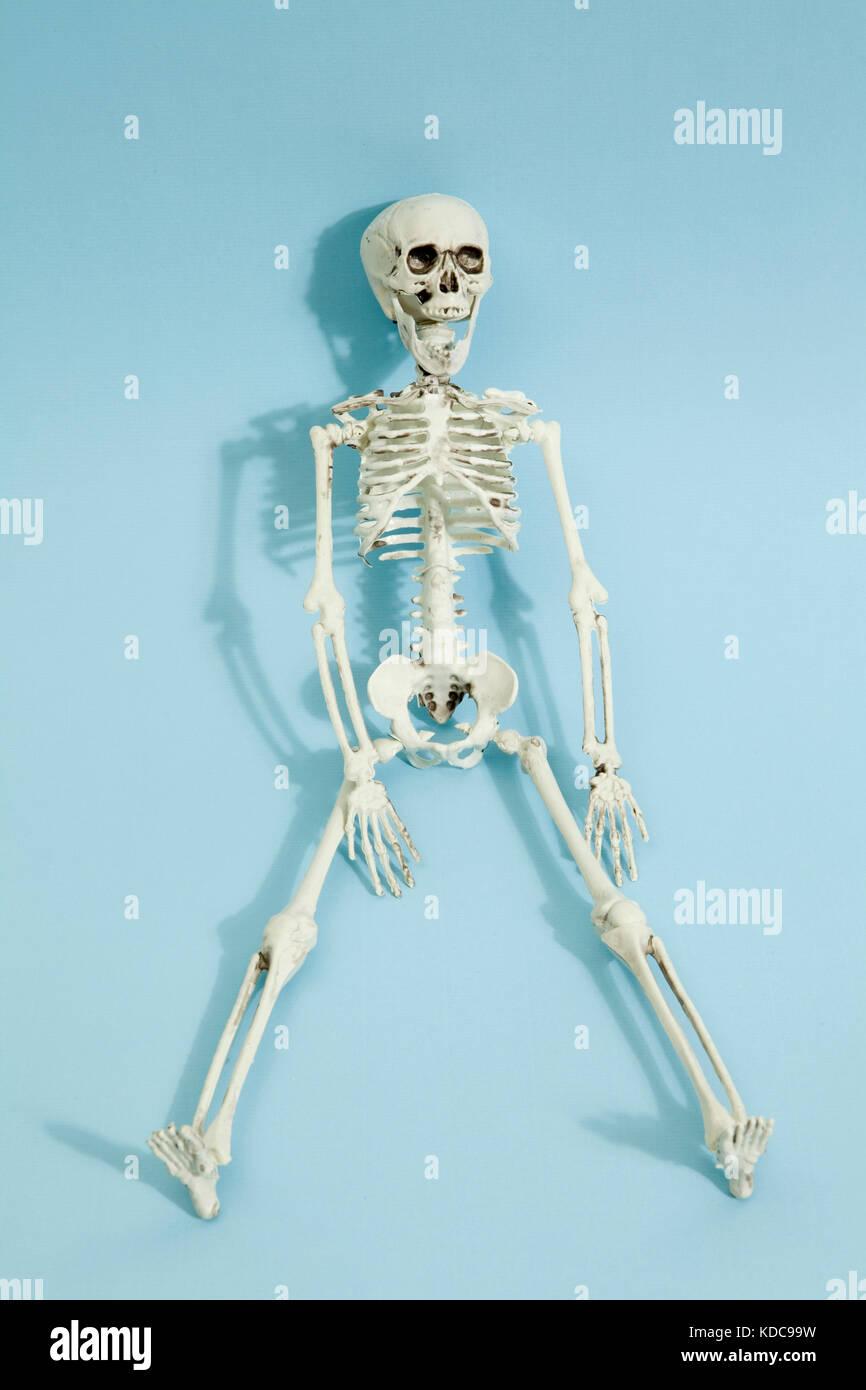 Esqueleto de juguete de plástico aislado sobre un fondo azul ...