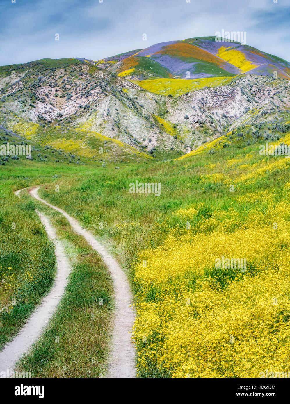 Campo de margaritas de ladera (monolopia lanceolata) y carretera de terracería carrizo plain monumento nacional, Imagen De Stock