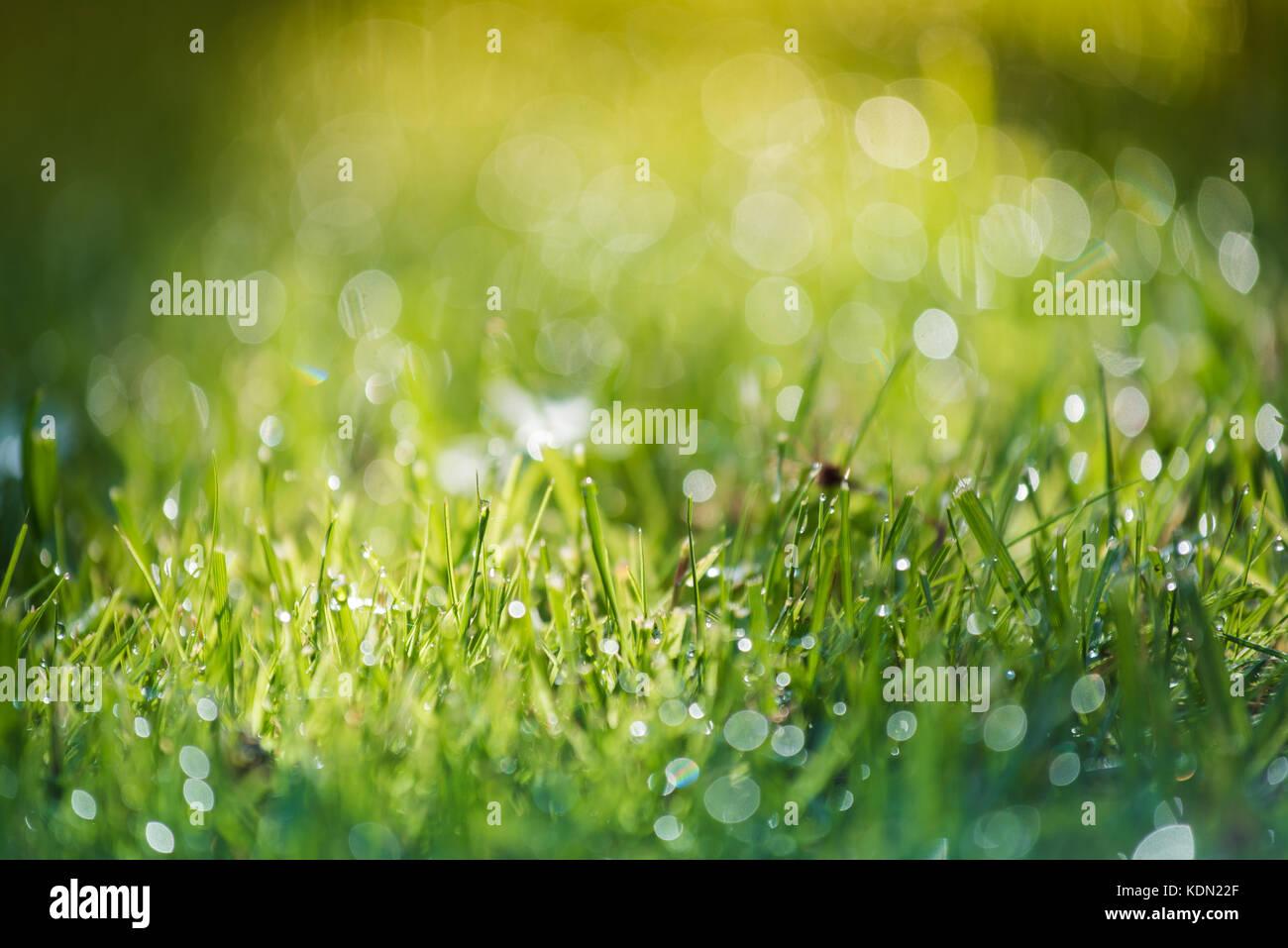 Hierba y agua en pequeña profundidad de campo intencionalmente Foto de stock