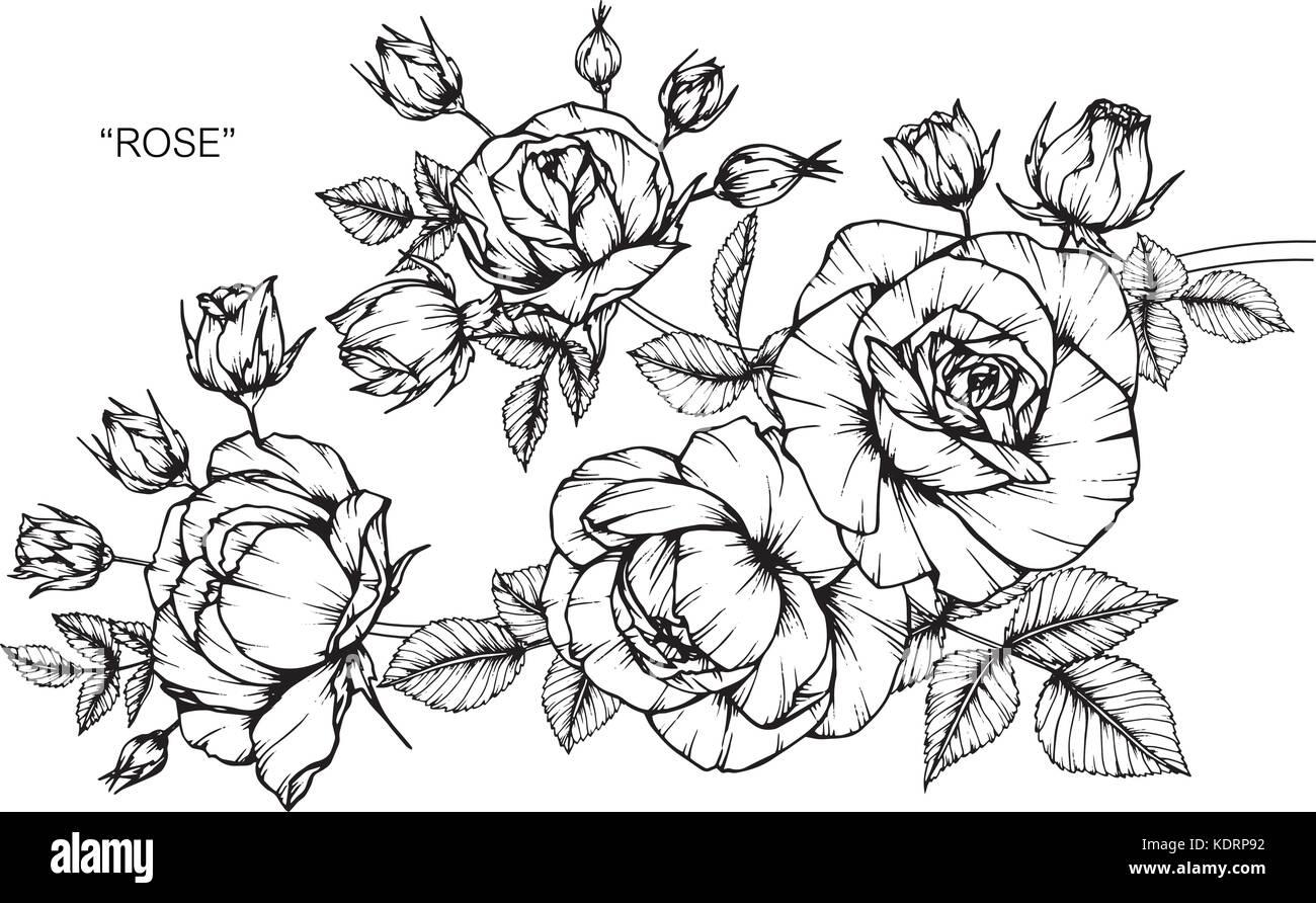 Dibujos De Flores Rosas
