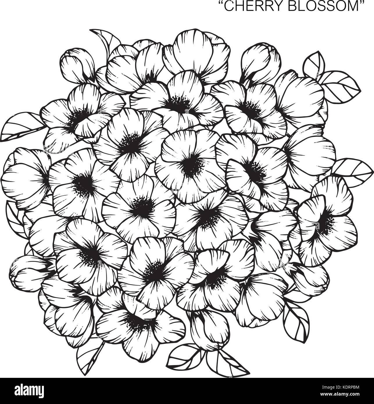Bouquet De Flores De Cerezo En Flor Dibujo Ilustración Del Vector