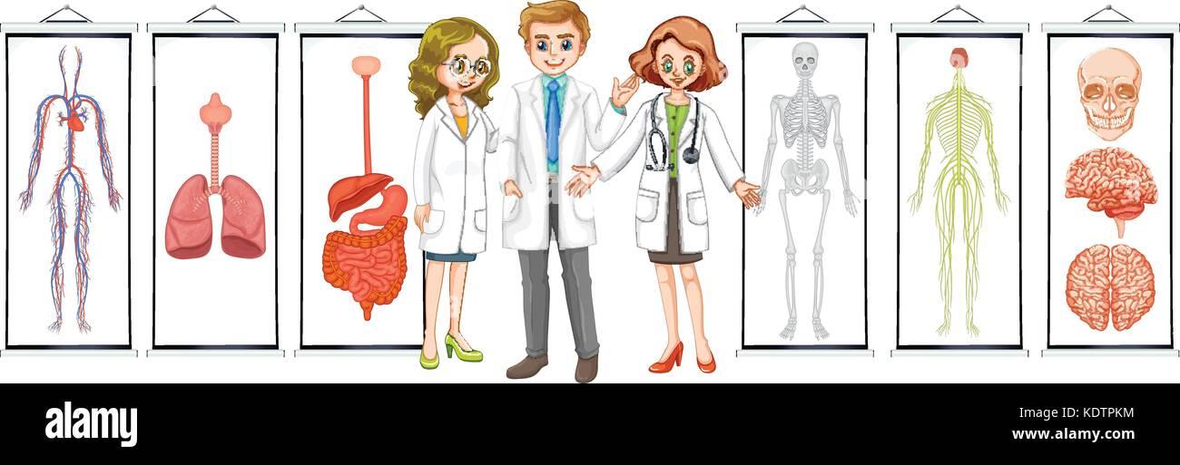 Tres doctores y diferentes esquemas de sistemas humanos ilustración ...