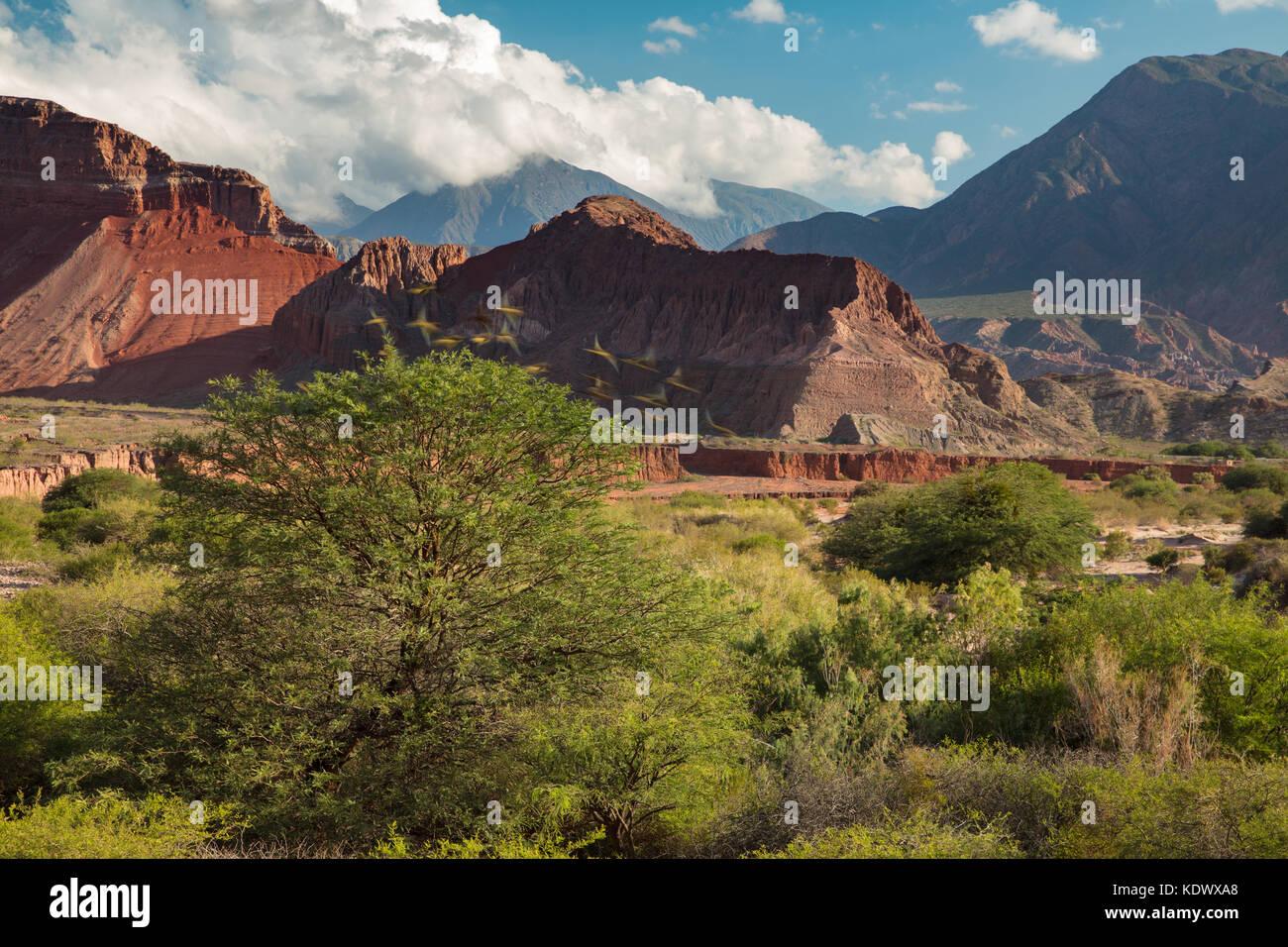 Los loros que despegó de un árbol en la Quebrada de la caracolas, Valles Calchaquíes, Provincia de Imagen De Stock