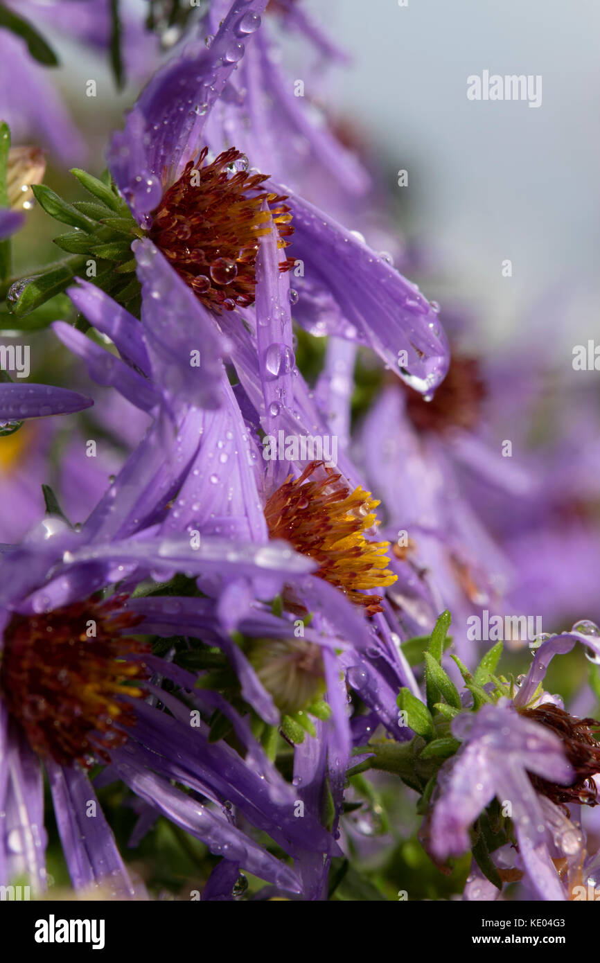 Belleza en biología Imagen De Stock