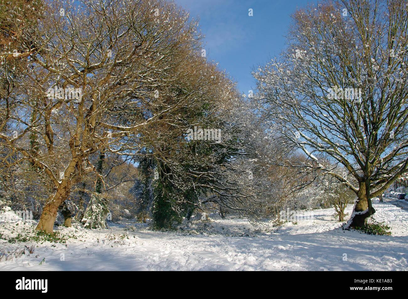 Southborough común, Kent en la nieve Foto de stock