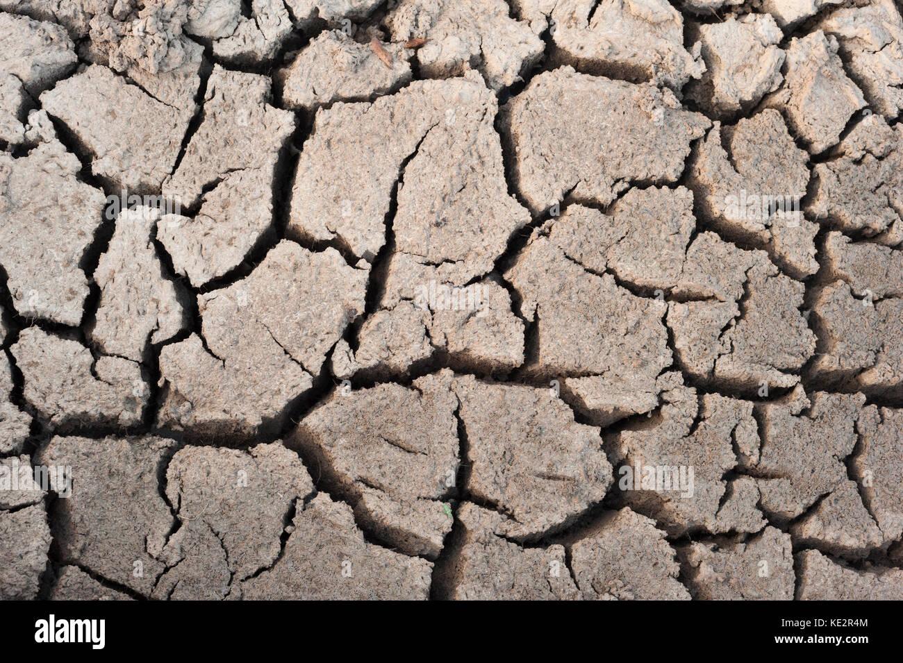 Barro seco en el pantanal durante la temporada seca Foto de stock