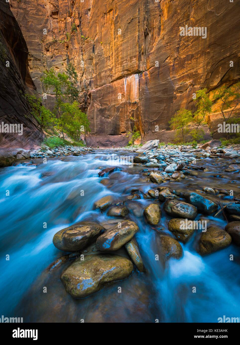Los Narrows, en el Parque Nacional de Zion, cerca de Springdale, Utah) es una sección del cañón en el North Fork Foto de stock