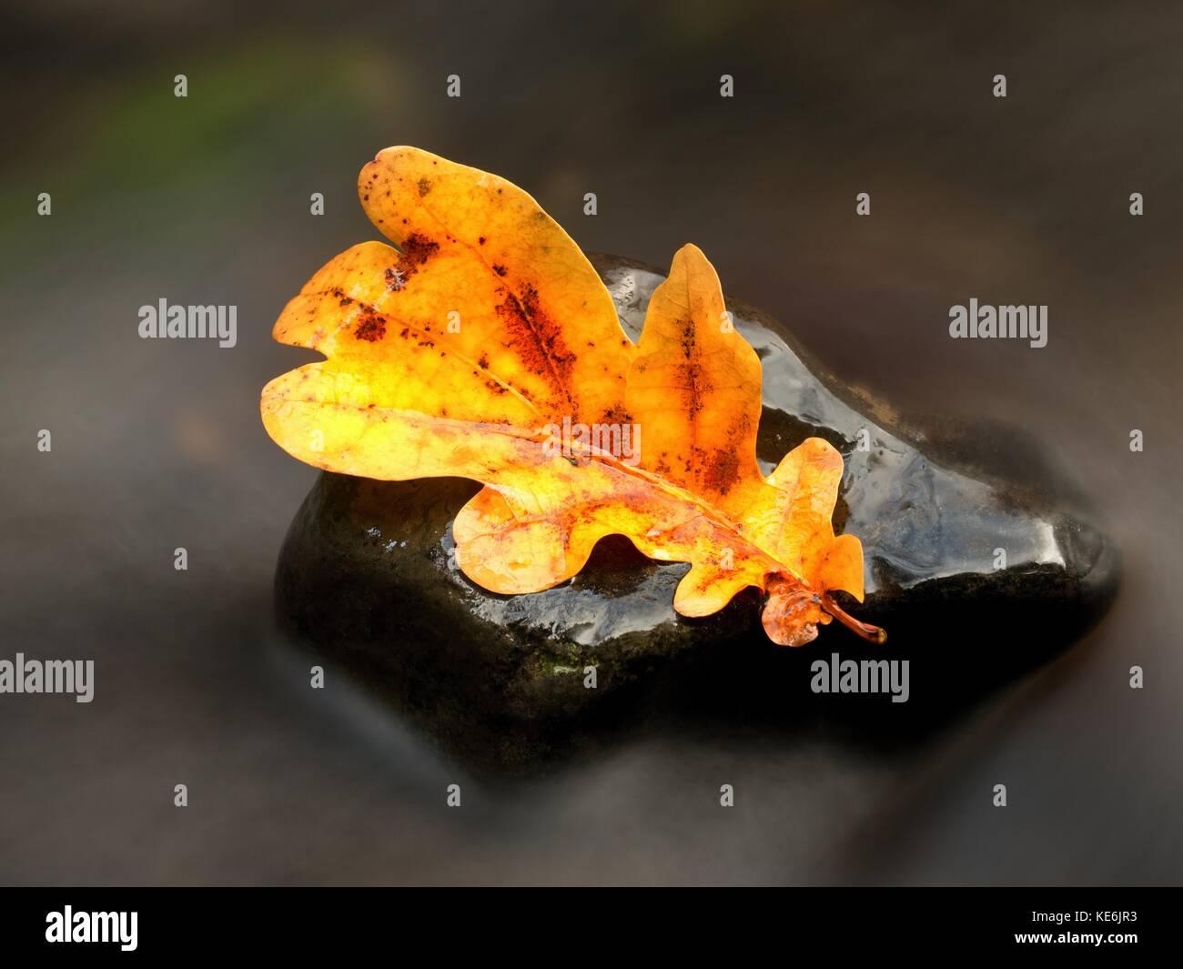 Una caída de hojas coloreadas descansando sobre una piedra con agua que fluye a su alrededor. Naranja amarillo Imagen De Stock