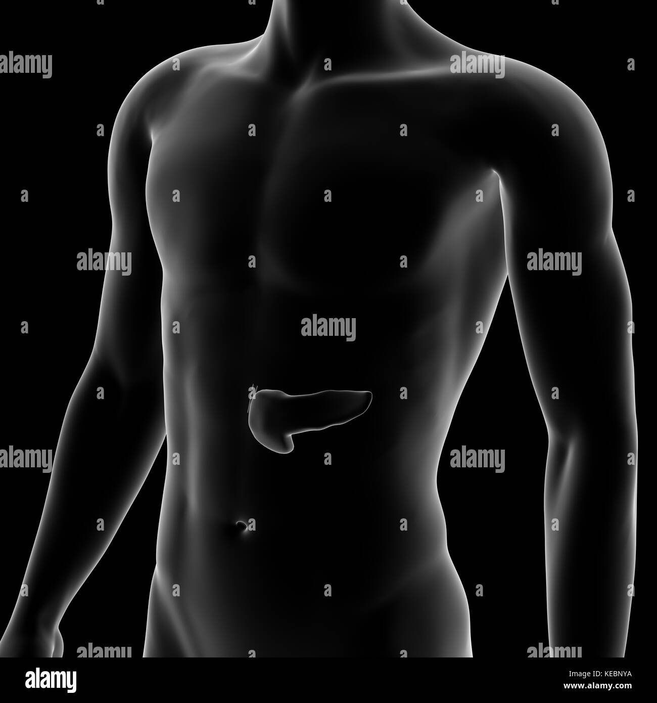 El páncreas, el órgano interno, cuerpo humano Foto & Imagen De Stock ...