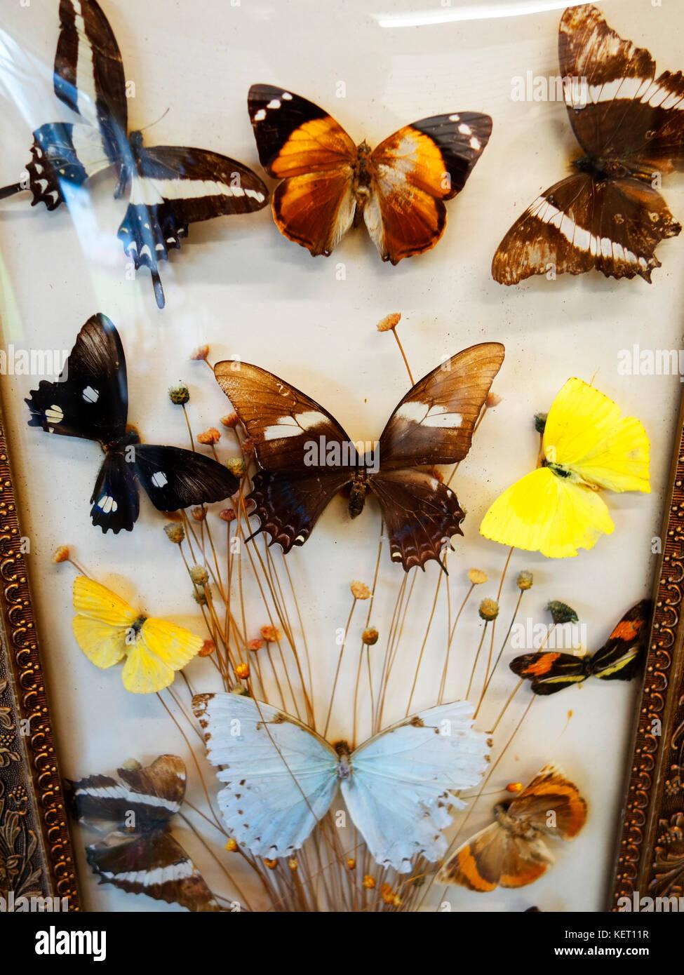 Arte y antigüedades Mariposa Collection un inusual estilo Foto Enmarcada De Papel butteflies