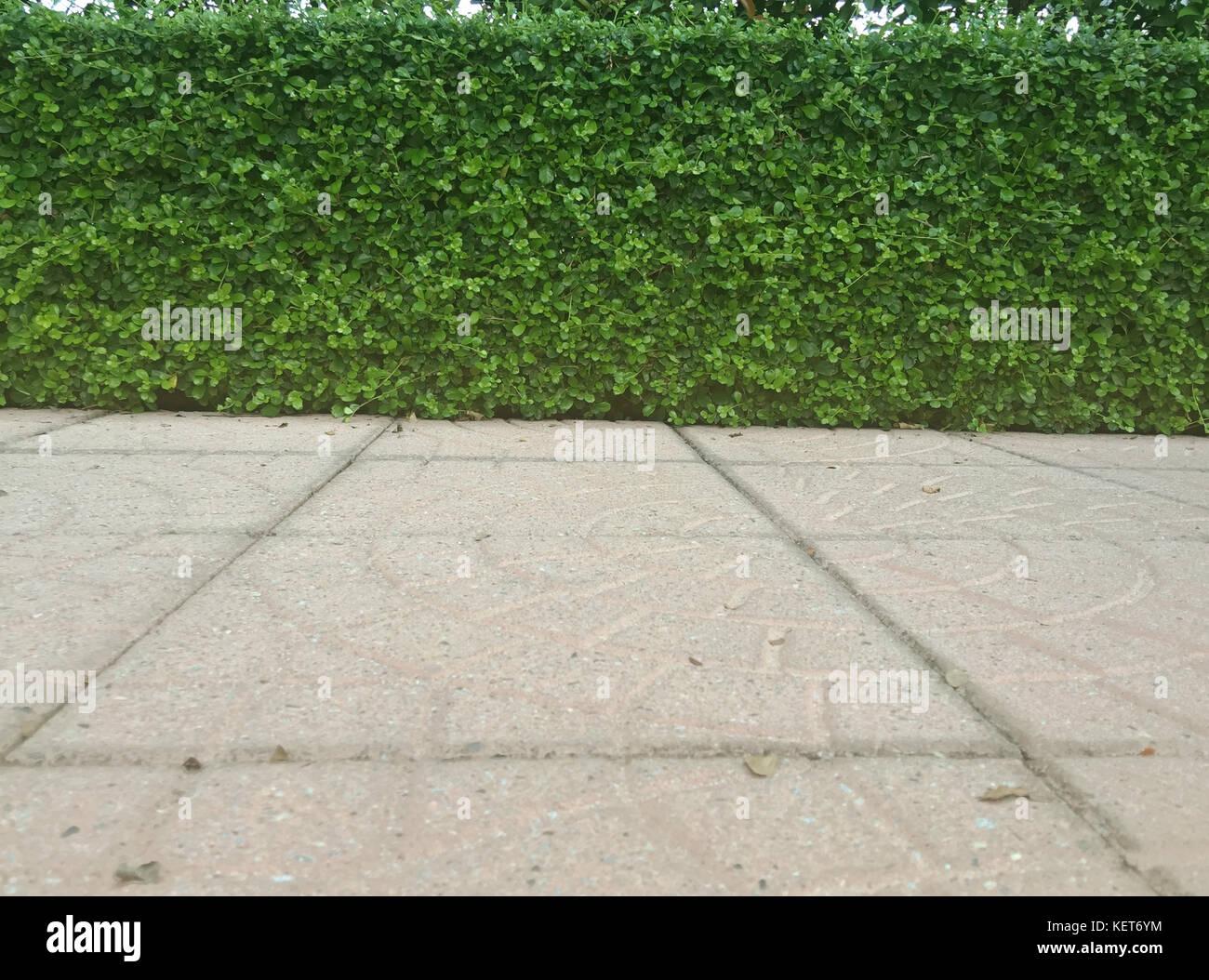 Muro De Pie Y Hojas Verdes Y Suelos Y Plantas De Jardín En