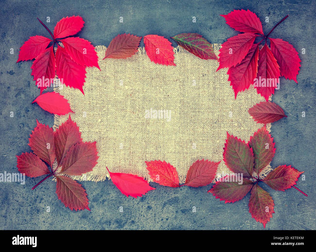 Resumen otoño composición. Marco de hojas rojas sobre lienzo de ...
