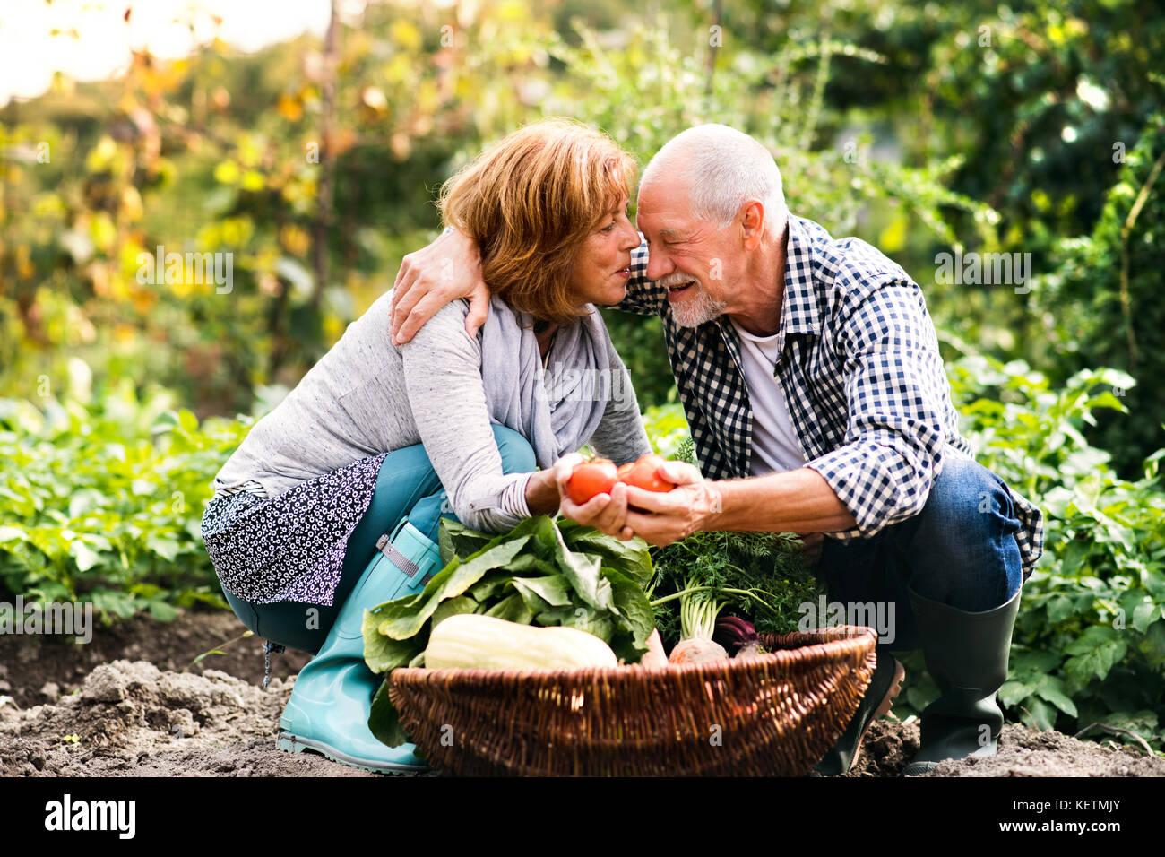 Pareja senior de jardinería en el patio jardín. Foto de stock