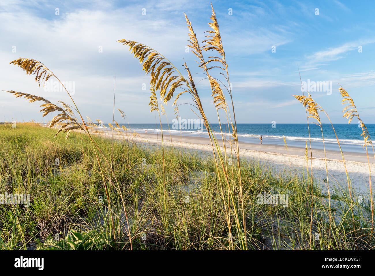 Bastidor de avena del mar Las hermosas playas a lo largo de Amelia Island, Florida Foto de stock