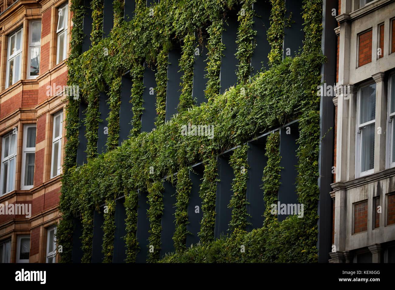 Las plantas de hoja perenne muro viviente para la fachada de la casa de sinergia en Southampton Row en Londres, Imagen De Stock