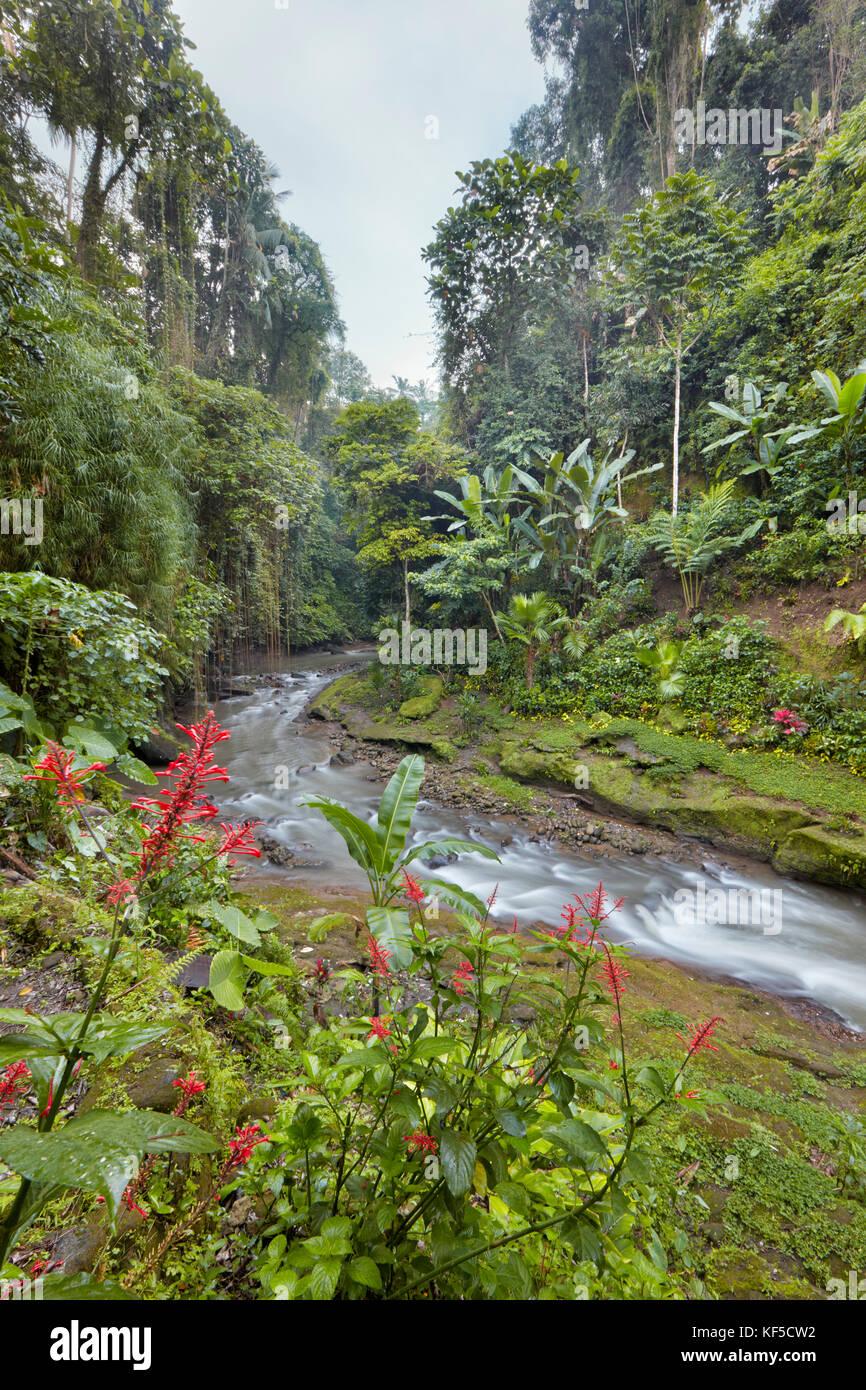 Pequeño río que atraviesa la selva cerca del Hotel Tjampuhan Spa. Ubud, Bali, Indonesia. Foto de stock