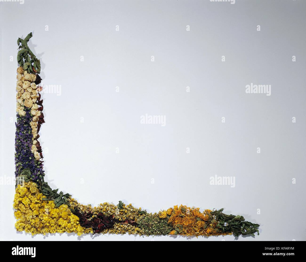 Still life, Herb. composición por frame Imagen De Stock