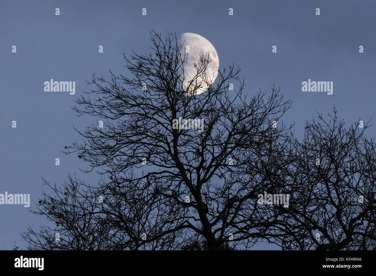Encerar Luna en cuarto creciente a través de los árboles Foto ...